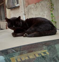 cat 10 250x263