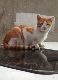 cat 13 200x277