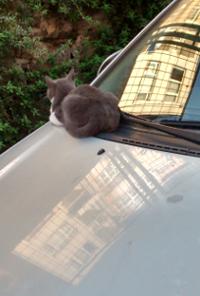 cat 14 200x296