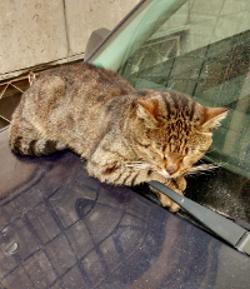 cat 15 250x289