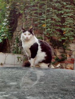 cat 6 250x330