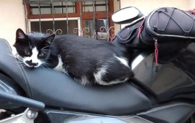 cat 7 395x250
